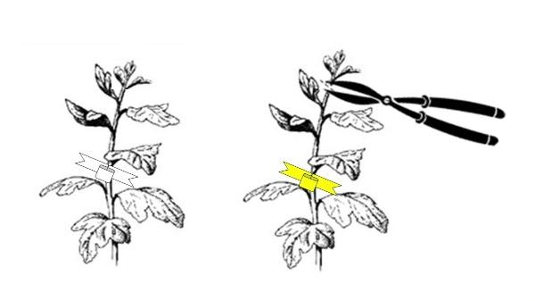 Las plantas y la hidra de 7 cabezas