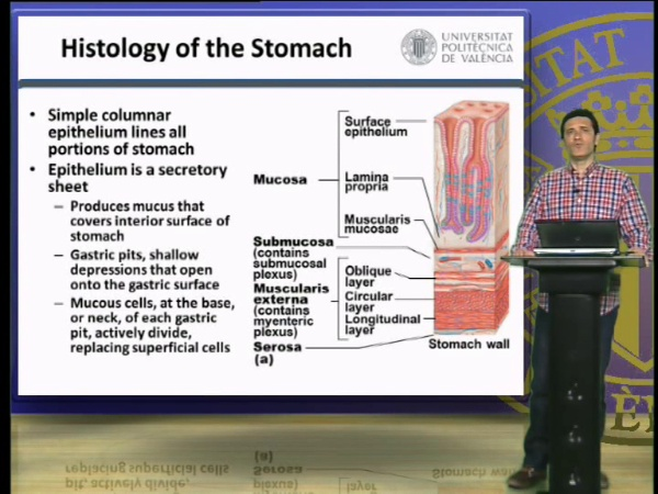 The Stomach, Gastric Juice