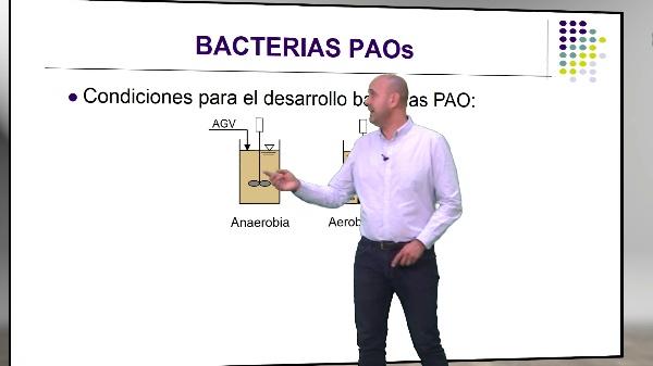 Metabolismo Avanzado de las Bacterias PAO en una EDAR
