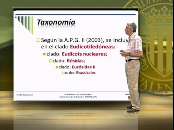 Práctica 14 (10), Familia Brasicáceas