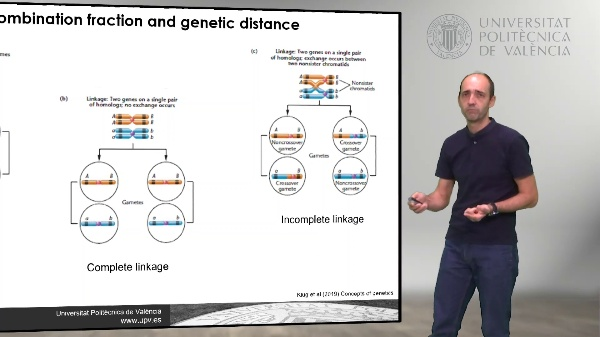 Three-point genetic map direct approach