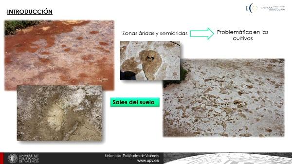Extracto de Pasta saturada del suelo