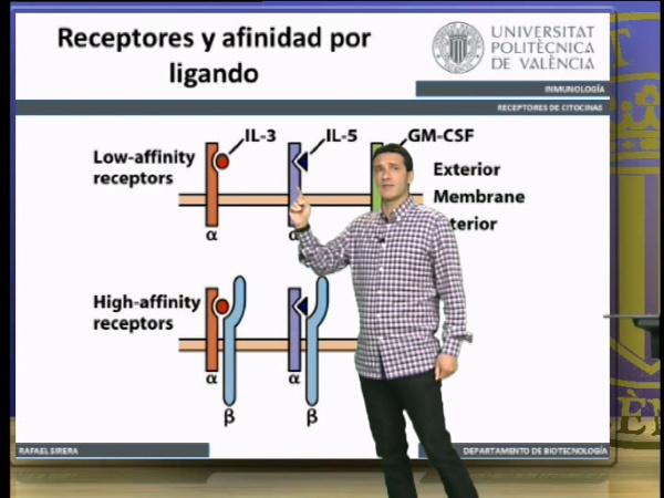 Receptores de citocinas, transducción de señales