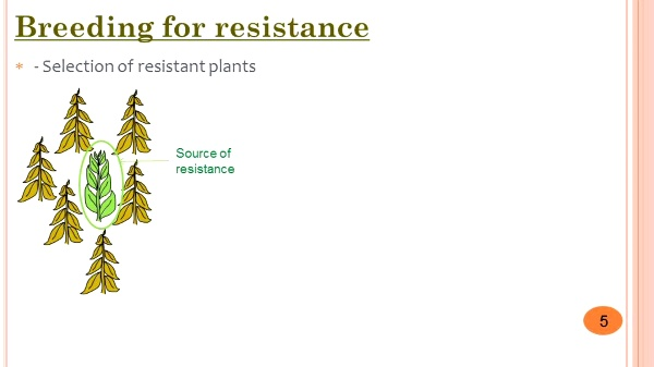 Breeding for resistance to diseases. Selection techniques