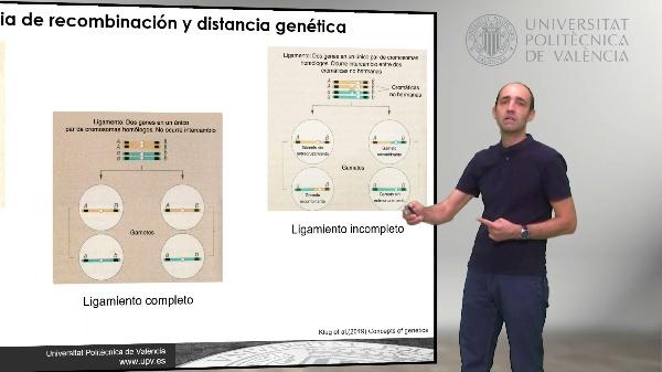 Mapas genéticos de tres puntos. Planteamiento directo