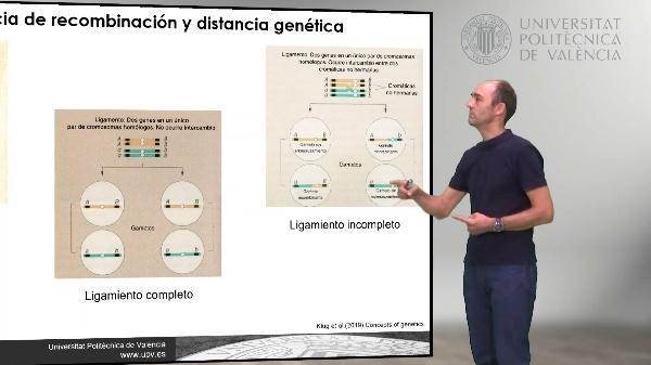 Mapas genéticos de tres puntos. Planteamiento indirecto