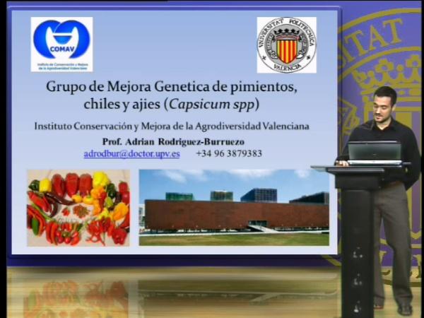 Grupo de Mejora Genética de Pimientos, chiles y ajies (Largo)