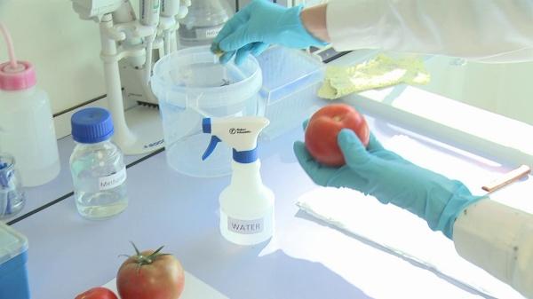 Sample Processing for Metabolomic Analysis