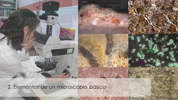 El microscopio óptico básico. Elementos y manejo
