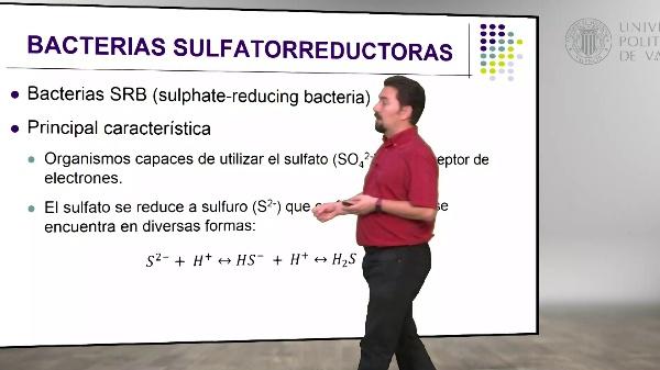 Metabolismo de las bacterias sulfatorreductoras