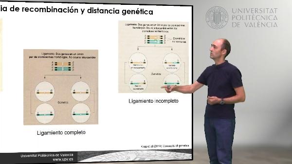 Mapas genéticos mediante la frecuencia de recombinación