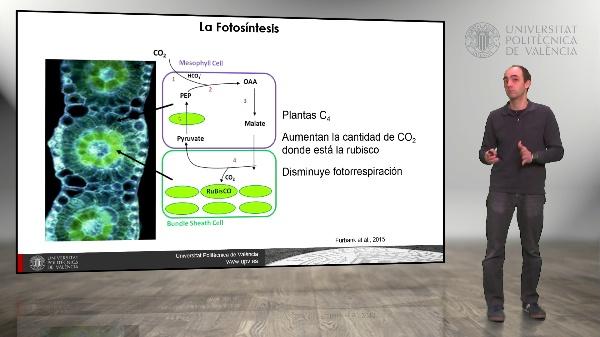 El rendimiento de los cultivos. Incremento de la eficiencia fotosintética