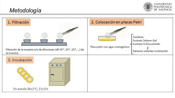 Identificación y Recuento de E.coli y bacterias coliformes