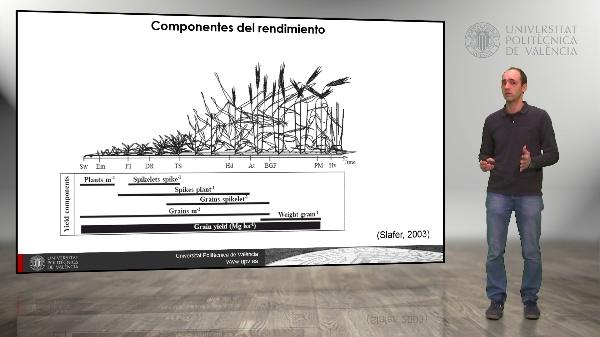 El rendimiento de los cultivos. Aumento del rendimiento, Biomasa e índice de cosecha