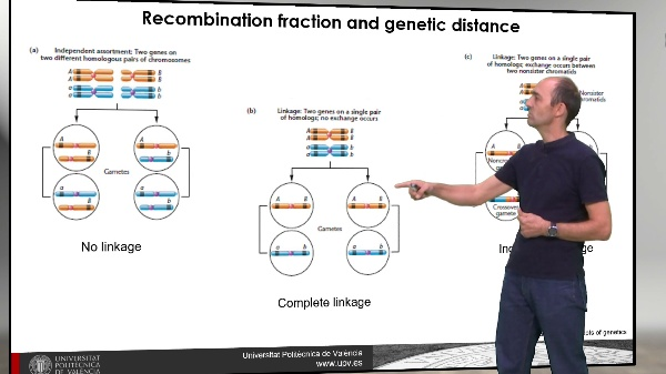 Gene mapping recombination frequencies