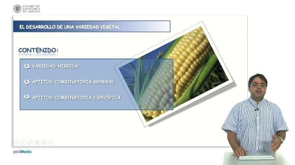Desarrollo de variedades híbridas: cálculo de aptitud combinatoria