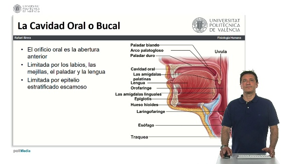 La cavidad oral