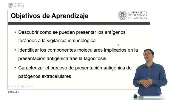 Presentación de antígenos foráneos y fagocitados.