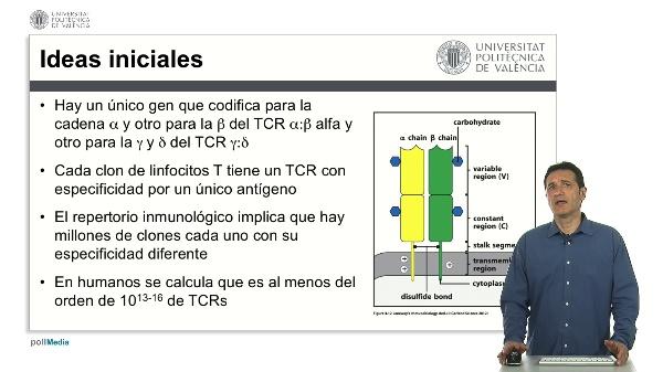 Genética del TCR