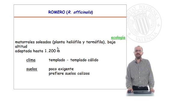 Especies de interes I. Aromáticas. Lamiaceae. Rosmarinus