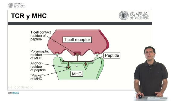 El complejo principal de histocompatibilidad