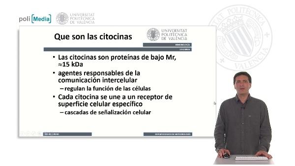 Citocinas, caracterísiticas