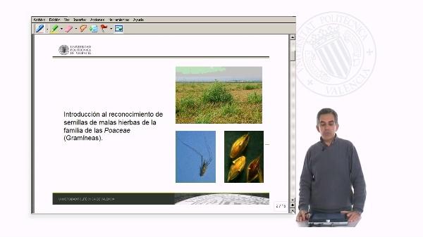 Reconocimiento de semillas de malas hierbas Gramíneas
