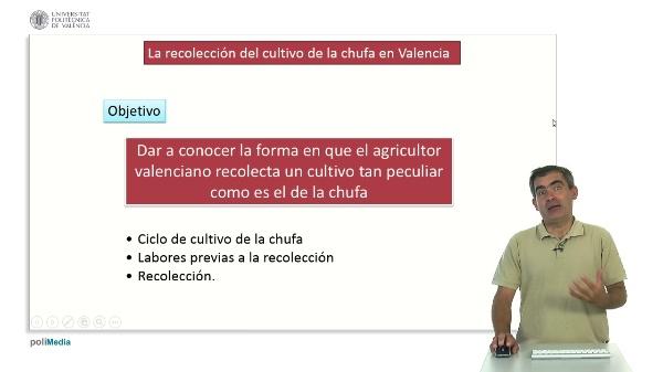 La Recolección del Cultivo de la Chufa en Valencia