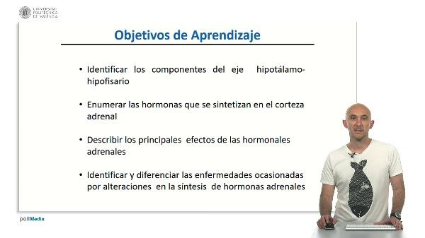 Sistema endocrino de la glandula adrenal