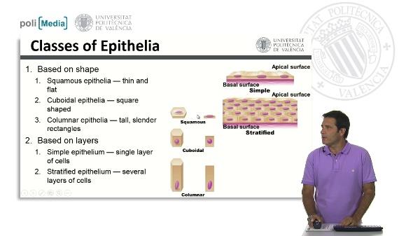 Clases de tejidos epiteliales