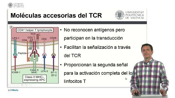 Moléculas accesorias del Complejo del TCR