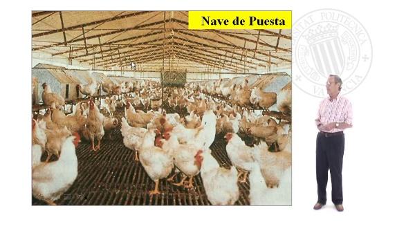 Granjas de pollos de carne