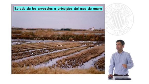 Labores preparatorias en el arrozal valenciano