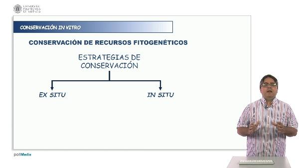 Conservación in vitro de recursos fitogeneticos.