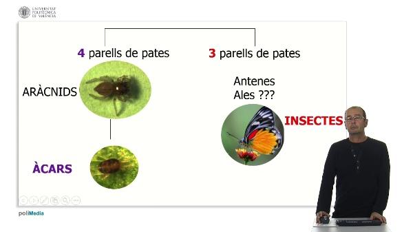 Aspectes bàsics dels insectes i acars fitòfags