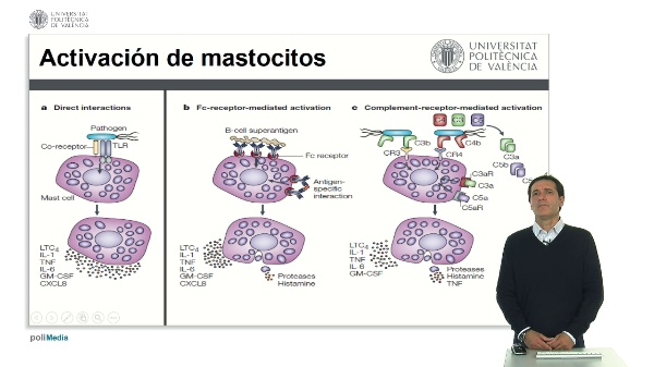 Activación de Mastocitos.
