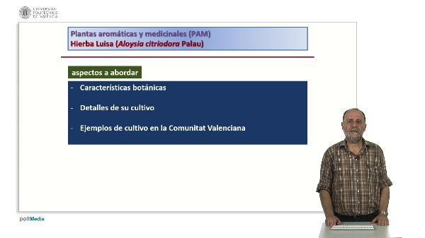 Plantas aromáticas y medicinales (PAM) Hierba Luisa (Aloysia citriodora Palau)