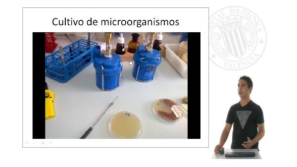 Investigación y estudio de microorganismos productores de antibióticos