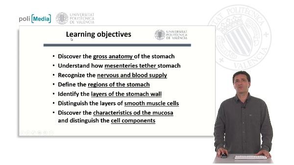 Estómago, anatomía e histología funcional