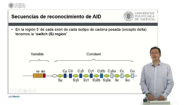 Cambio de isotipo de las inmunoglobulinas