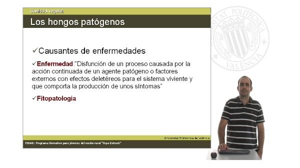 Unidad 2.4. Los hongos patógenos. Factores de incidencia y su papel en la degradación de detritus.