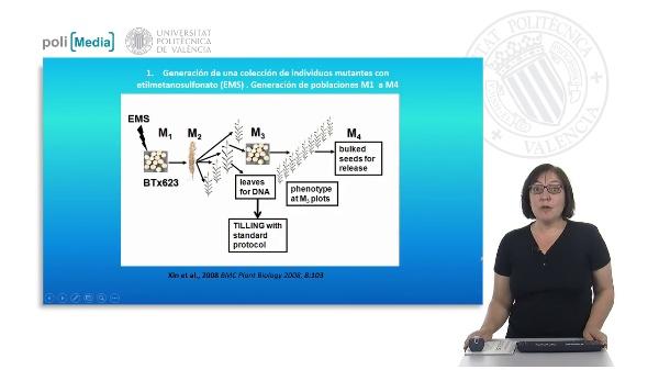 Tilling. Una herramienta para el estudio de la función de los genes y la generación de nueva variación