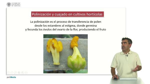 Polinización y Cuajado en Cultivos Hortícolas