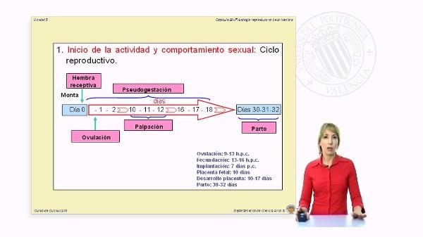 Fisiología reproductiva de la coneja (Parte 2)