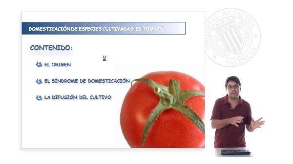 Domesticación de las especies cultivadas: el tomate