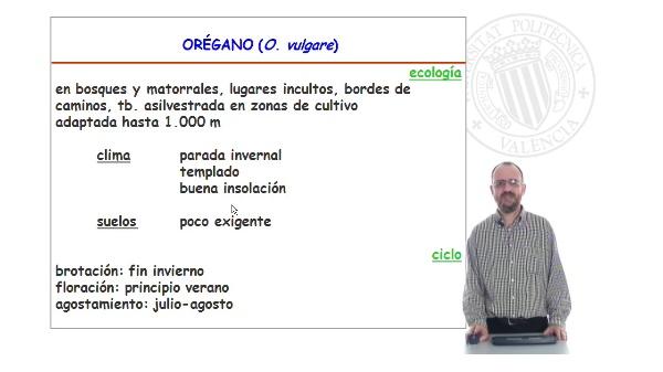 Especies de interes I. Aromáticas. Lamiaceae. Origanum.
