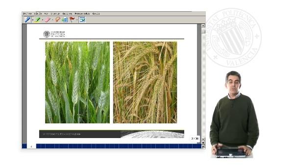 Reconocimiento de Cereales por sus Inflorescencias