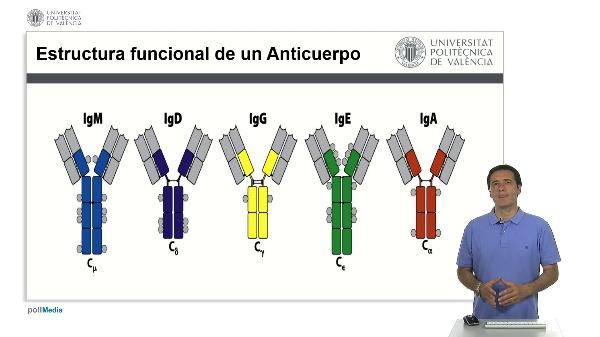 Clases de Anticuerpos.
