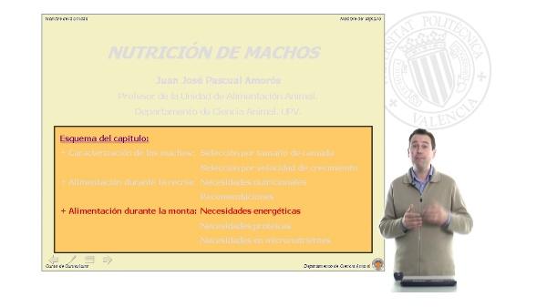 Nutrición de Machos - Parte 2