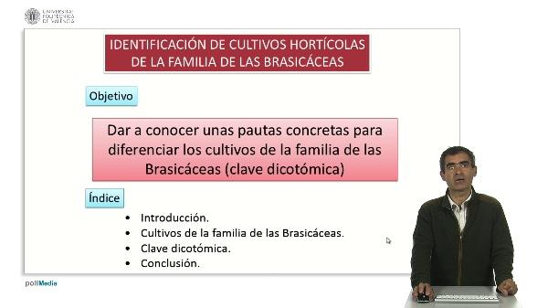 Identificación de cultivos hortícolas de la familia de las brasicáceas.
